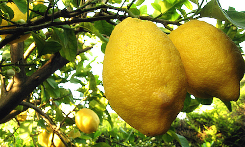 Eugenio Montale, I limoni