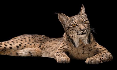 H. P. Lovecraft, I gatti di Ulthar