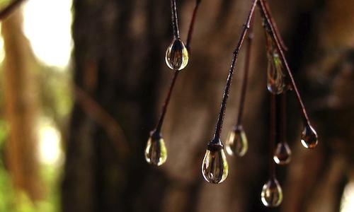 G. D'Annunzio, La pioggia nel pineto